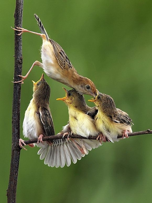 hungry little ones