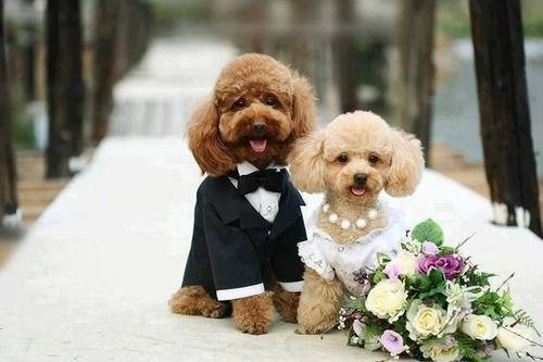 Wedding Inspiration | Wedding Photography. www.partyista.com