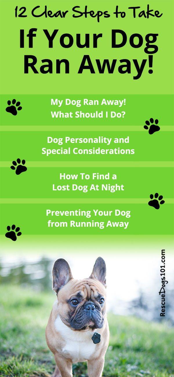 My Dog Ran Away What Should I Do Dogs Kids Dog Runs Dog