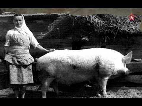 Легенды советского сыска Письмо Сталину
