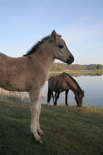 Polish Pony, Roztocze National Park, Poland, via Flickr.