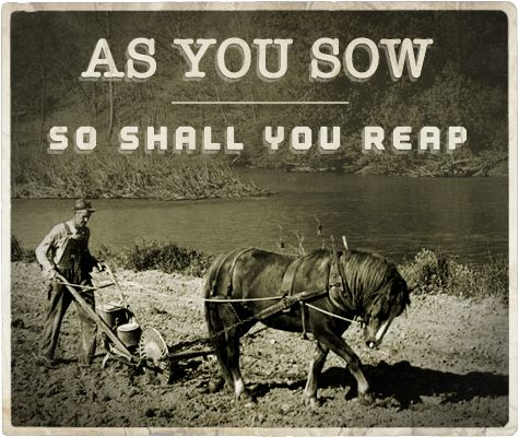 As you sow as you reap essay
