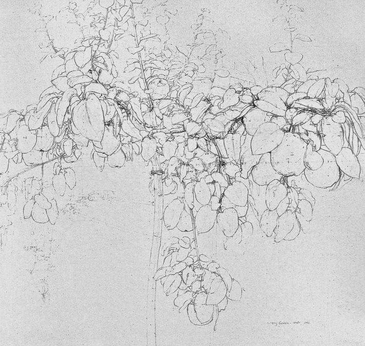 antonio lopez garcia drawing - Google Search