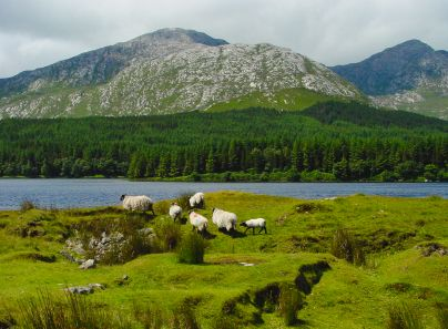 Connemara, or Land of the Sea, is a wild region of bogland, pristine lakes and mountains. Connemara is Ireland's big sky country and is in the west of County Galway. Unlike the more famous Ring of ...
