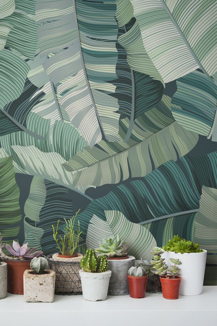 Big and bold leaf graphics make up this beautiful tropical wallpaper design. The light and dark shades of green give your interiors real depth and dimension. It almost looks like the leaves are about to leap off the wall! This wallpaper design looks great as an accent wall in kitchens and hallway spaces.