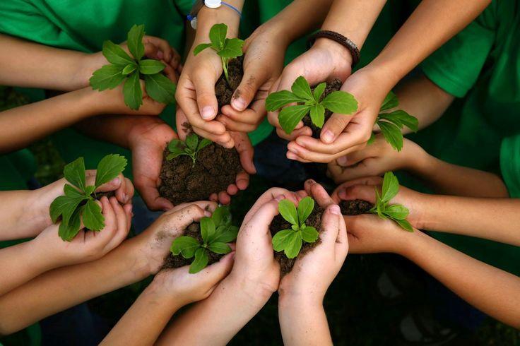 4 Planos de aula prontos de Ciências sobre educação ambiental: água, poluição, extinção de animais e sustentabilidade para ensino fundamental.