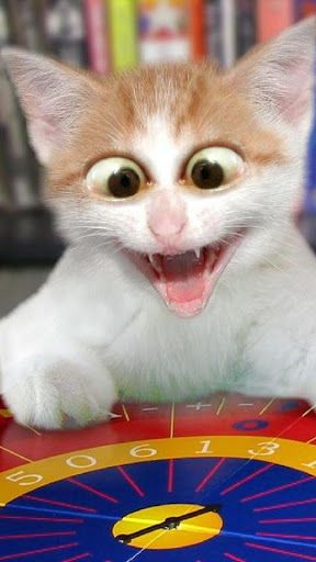 Now you can watch funny cat videos that will make you happy instantly. Guaranteed to make you laugh. Install for FREE the Funny Cats App and start laughing with funny jokes with cats. You will get instantly updated the funniest videos of cats, including videos of pets, baby cats, cats and dogs, babies and kittens and pictures of kittens .<p>Features:<p>- Enjoy videos of funny kittens updated every minute every time you open the app .<br>- Share with your friends the funniest videos of cute…