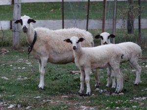αγροτουριστική Φάρμα, Φάρμα ζώων, Ράντζο πόνυ