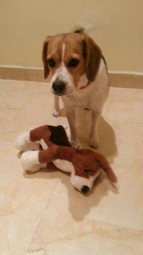 Beagle and her mini beagle ....