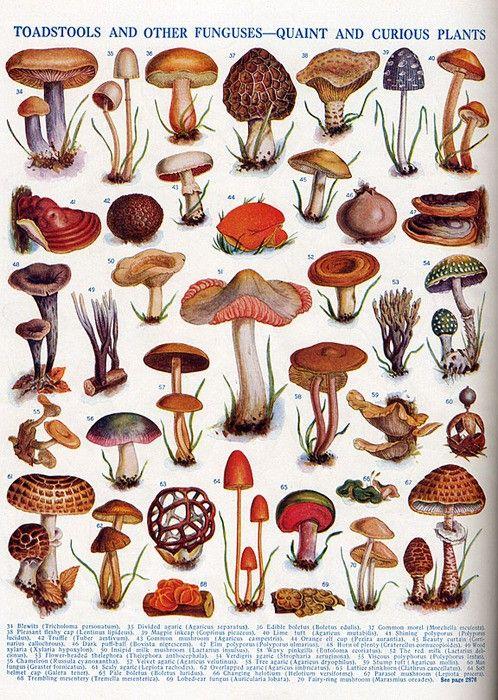 Mushroom / Fungi Quaint and curious
