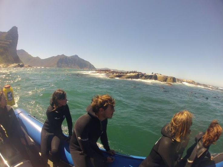 Things to do in Cape Town, South Africa. Snorkellers at Duiker Island, South Africa. Image by Simon Richmond / Lonely Planet