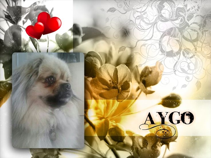 Aygo ♥