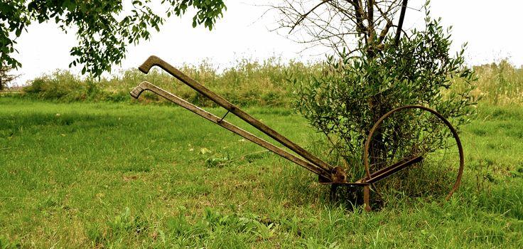 ancient instruments # italian wine # B San Lazzaro di Savena