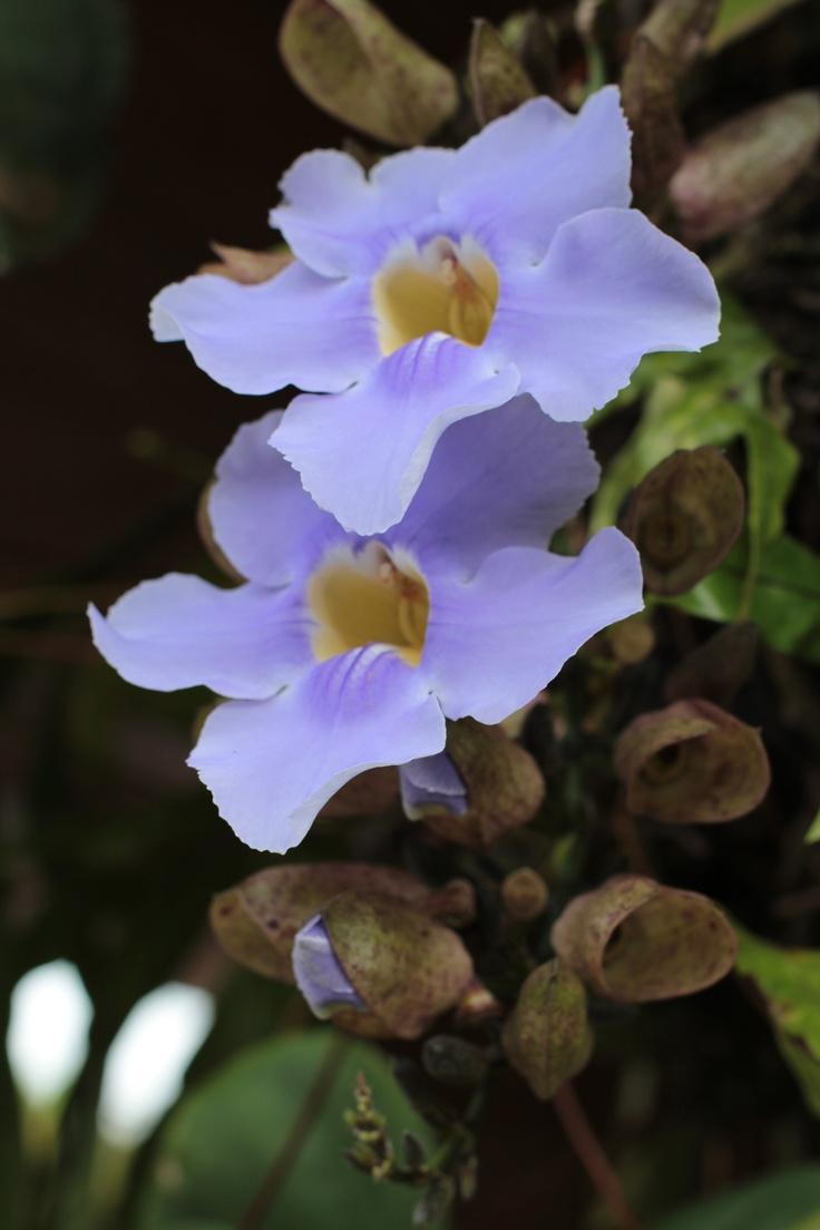 Tamesis, flowers
