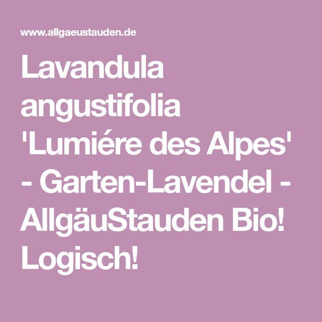 Lavandula angustifolia 'Lumiére des Alpes' - Garten-Lavendel - AllgäuStauden Bio! Logisch!