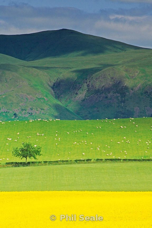 The Ochil Hills, Clackmannanshire. Photographed from near Clackmannan.
