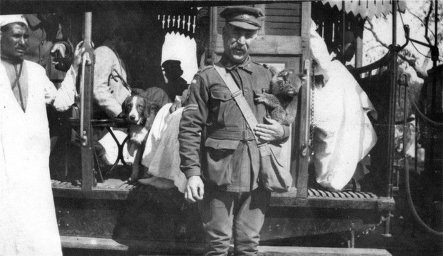 A corporal, probably on the staff of the 2nd Australian general hospital, holds a koala, a pet or mascot in Cairo, Egypt 1915.