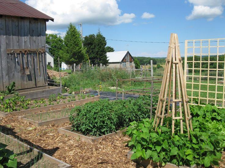 Growing An Organic Vertical Vegetable Garden On Trellis To