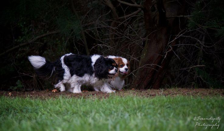 https://flic.kr/p/wfUdmA | Farm dogs (6)