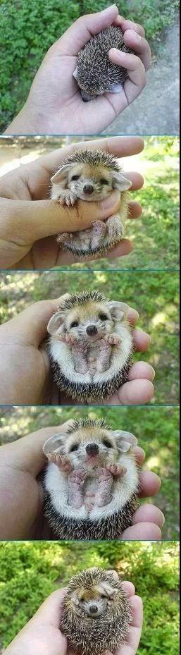 Cute hedgehog- eine wunderbare Art sich zu schützen!! Igel sind fantastische Vorbilder!