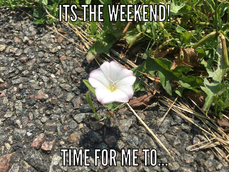 What are you doing this weekend?   #itstheweekend #plans #weekends #saturday #flowers #thaddesign #love