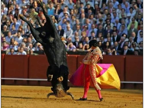 The best bullfighter
