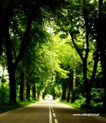 Droga do Robaczewa - Nidzica