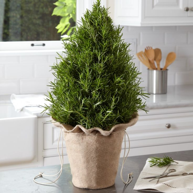 280 Best Garden Design Images On Pinterest Container