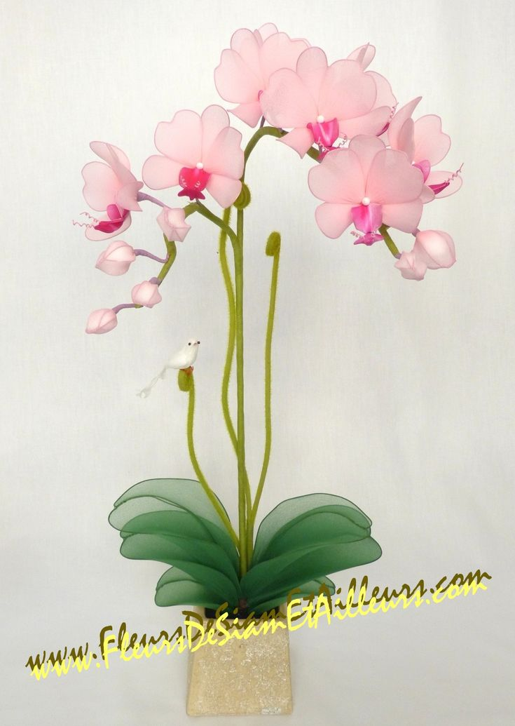 ORCHIDEE en collant