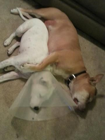 Best Cone Of Shame Images On Pinterest Funny Animals Funny - Dog portrait photography shows how they hate wearing the cone of shame
