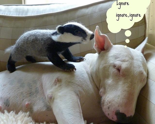 badger - Dictionary Definition : Vocabulary.com