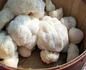Lion's Mane Mushroom: actually increases the amount of new neurons your brain creates!