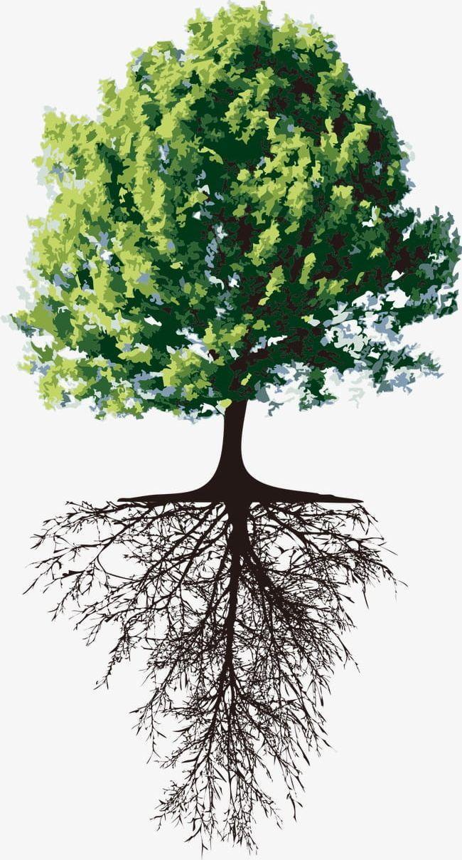 Tree Png Environmental Environmental Protection Plant Protection Root Environmental Art Forest Drawing Tree Roots