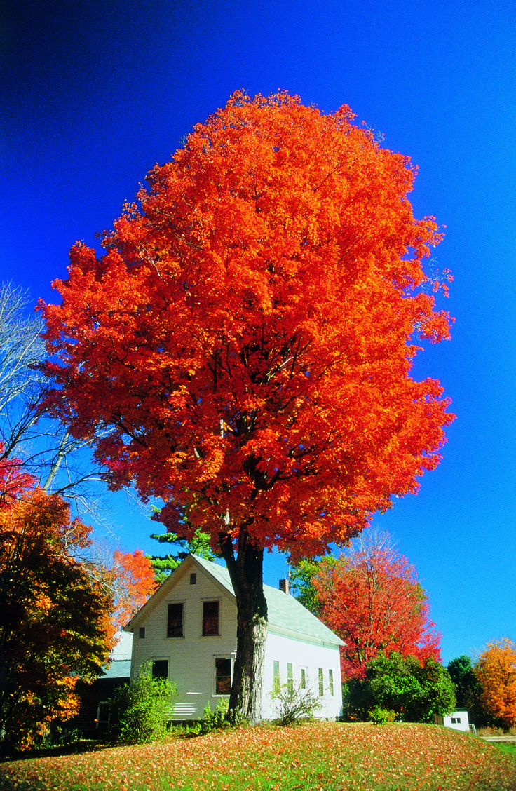 Foliage white house vermont photo credit discover new england by cris figueired
