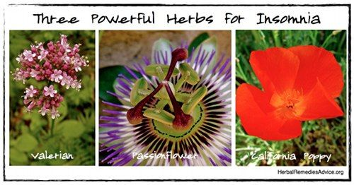 Herbs for insomnia can bring safe and effective insomnia relief.
