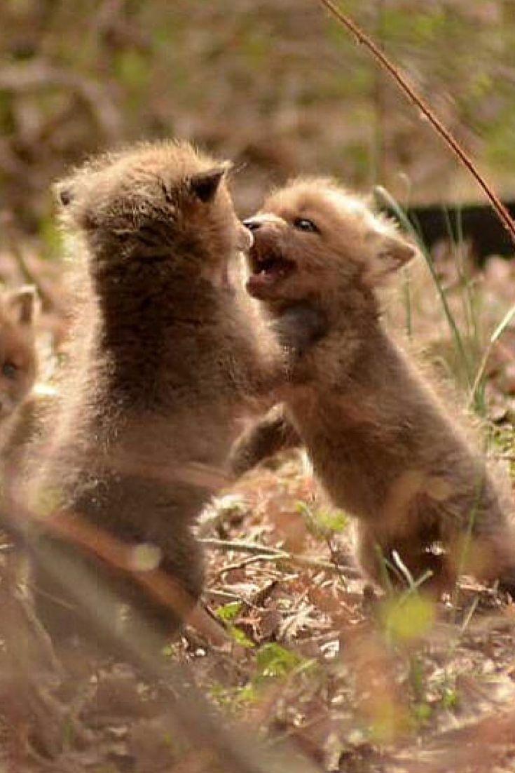 191 best super duper cute animals images on pinterest adorable