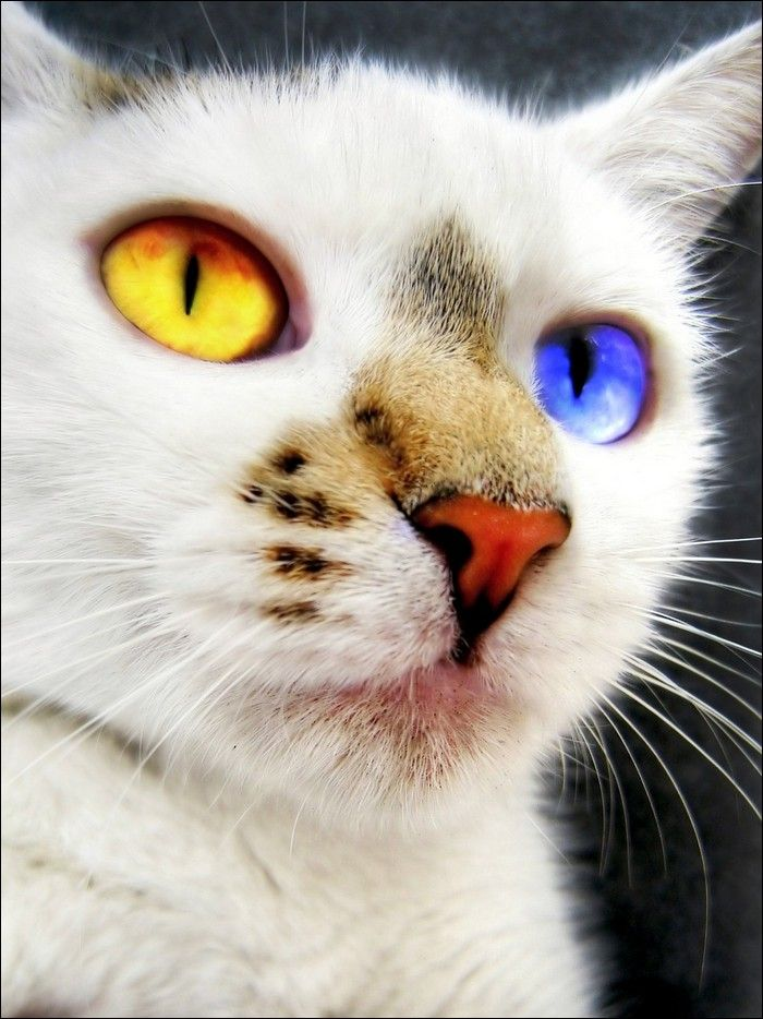 Skypelt(male,warrior) mate is Fernsong Cat eye colors