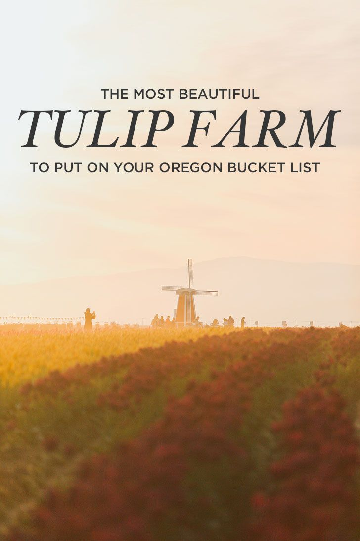 The Most Beautiful Tulip Farm to Put on Your Oregon Bucket List + More Tulip Festivals in the US You Must Visit #woodburn #oregon #woodenshoe #pnw #tulipfestival #tulips #pacificnorthwest #tulipfarms #tulipfields // Local Adventurer