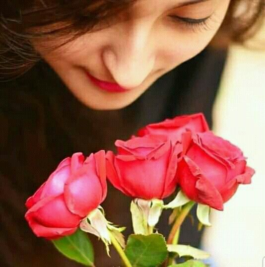 Whatsapp Profile Rose Flower Images For Whatsapp Dp Animaltree