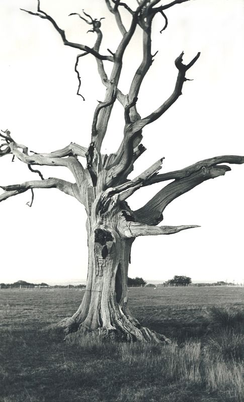 Dead Tree, Romney Marsh by Paul Nash, 1930