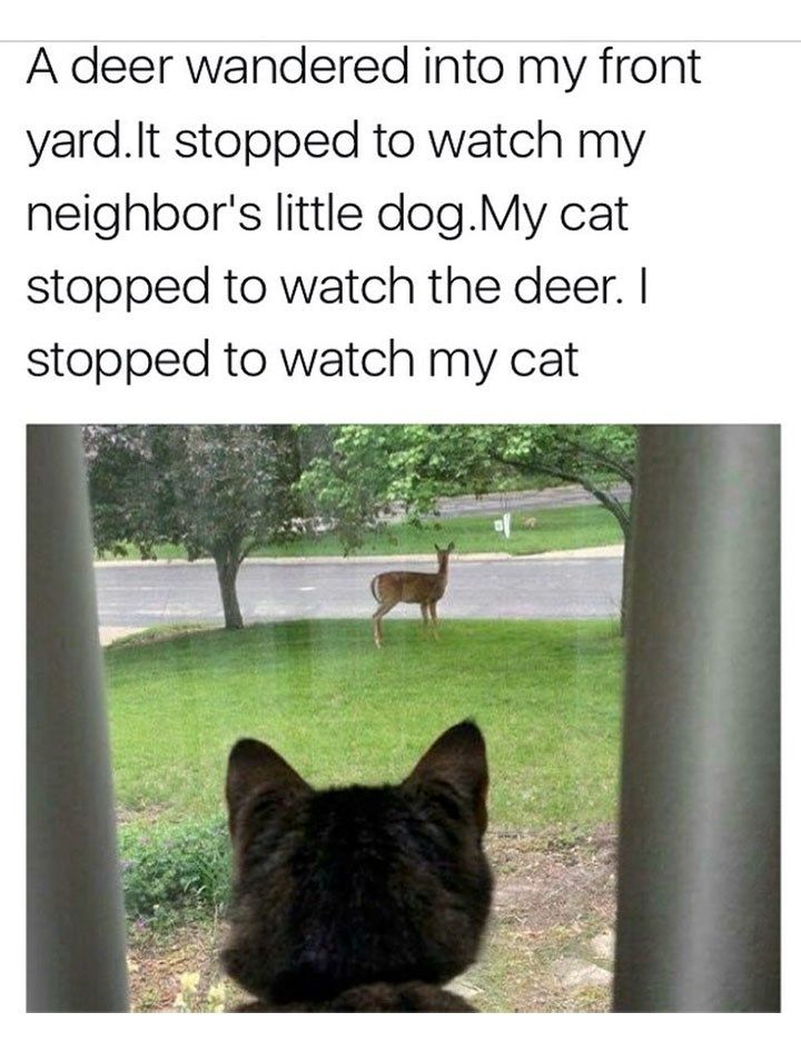 These Cat Memes Are All You Need On Caturday Funny Animals Funny Animal Memes Animal Memes