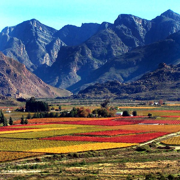 Autumn in the Hexriver valley/South Africa