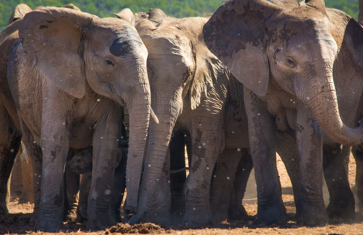 10 things you didn't know about Addo Elephant National Park