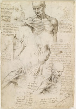 Superficial anatomy of the shoulder and neck. 1510 by Leonardo da Vinci