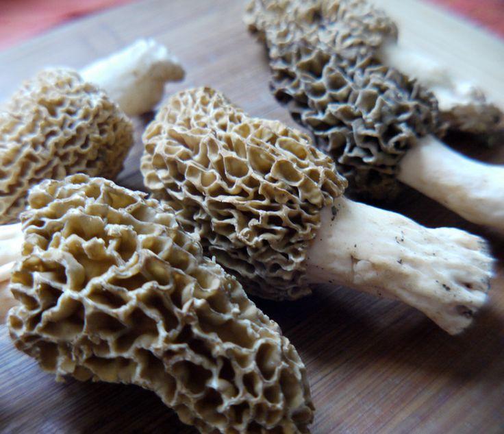 Beginner's Guide to Morel Mushroom Hunting - All Natural & Good