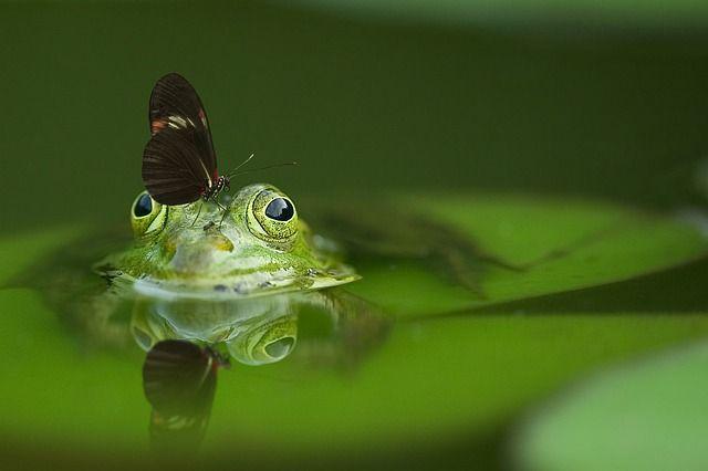 Algen im Teich ✓ Sie suchen nach einer Lösung für die Bekämpfung von Algen? ✓ Dann finden Sie hier die Lösung + beste Empfehlungen + Die Top Produkte ✓
