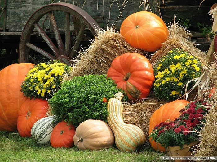 fall decor ideas seasonal holiday decor i love mixing pumpkins gords mums and even pansies in a vignette like this with a corn stalk propped up against - Fall Pumpkins