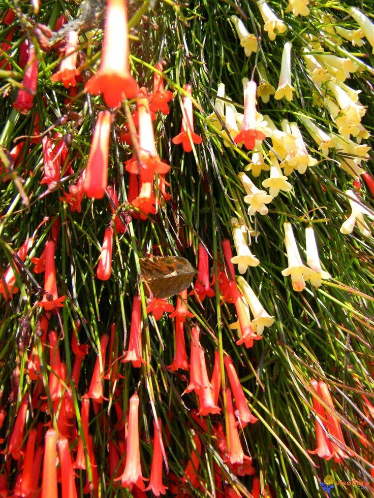 Les 25 meilleures id es concernant plantes retombantes sur for Plante pour bordure plein soleil