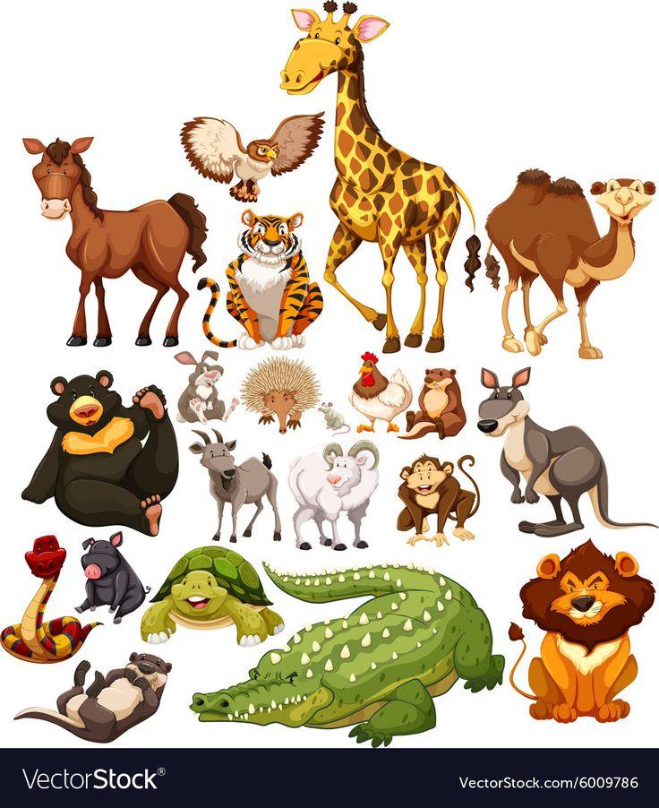 Different type of wild animals vector image on VectorStock