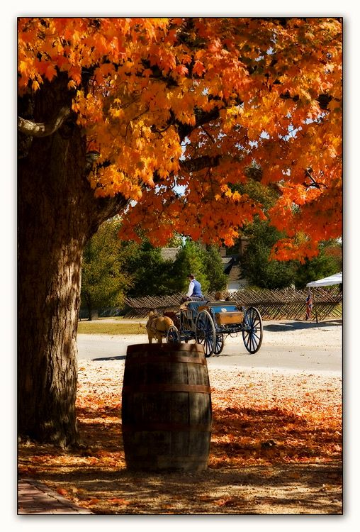 Carriage Ride In Colonial Williamsburg Seasons Autumn